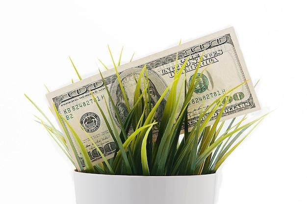 Uitbetalen honderd amerikaanse rekeningen in het gras geïsoleerd op een witte achtergrond.