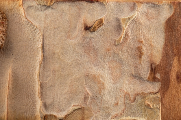 Uitstekende houten textuurachtergrond die door schorskevers wordt gegeten