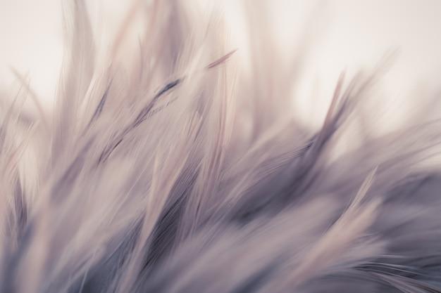 Uitstekende kippenveren in zachte en onduidelijk beeldstijl de achtergrond