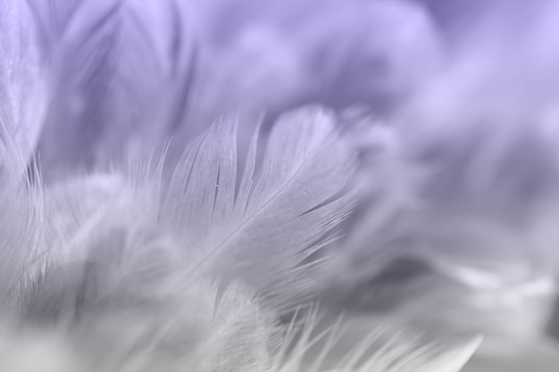 Uitstekende kippenveren op zachte en onduidelijk beeldstijlachtergrond