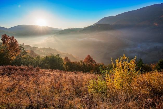 Uitzicht op adembenemende dageraad in naaldbos