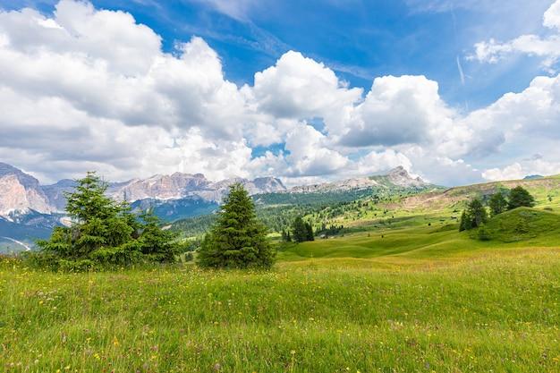 Uitzicht op alpenweide met wilde bloemen in de italiaanse dolomieten.