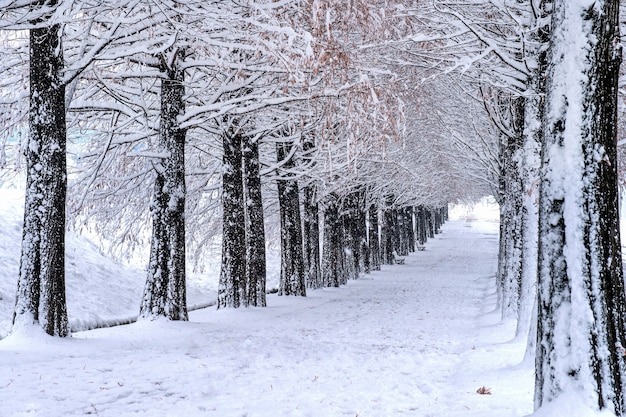 Uitzicht op bank en bomen met vallende sneeuw