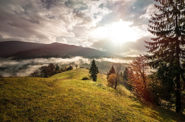 Uitzicht op berg bos zonsopgang met dramatische bewolkte hemel op achtergrond. mooi landschap met naaldbomen op heuvelweide. concept van de natuur.