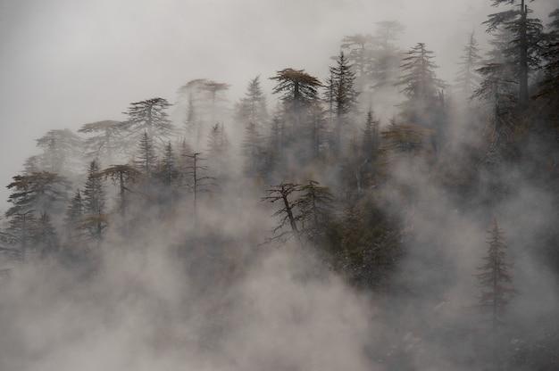 Uitzicht op bos bedekt met een mist