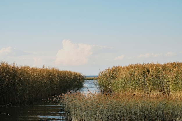 Uitzicht op de baltische baai begroeid met brokken. warme zomerdag, noordelijke zomer. natuur landschap