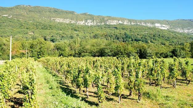 Uitzicht op de franse wijngaarden