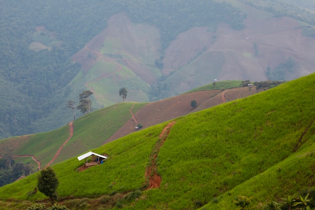 Uitzicht op de groene maïstuin in de bergen met kleine hut