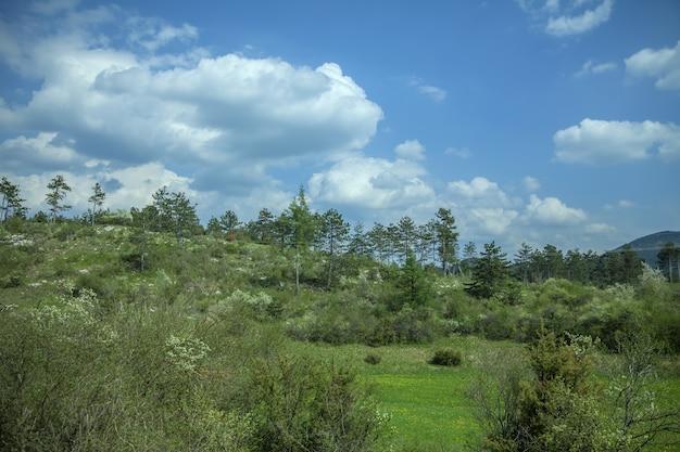 Uitzicht op de groene natuur in het voorjaar onder de blauwe hemel