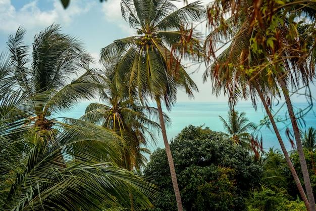 Uitzicht op de kokospalmen op de achtergrond van de zee