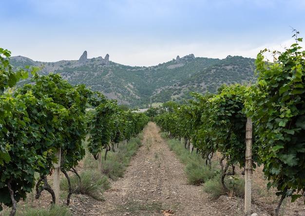 Uitzicht op de krim-bergen en wijngaarden, de krim
