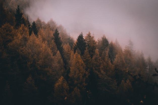 Uitzicht op de mistige bergen van de alpen in de herfst