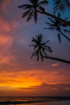Uitzicht op de oceaan met palmbomen bij zonsondergang