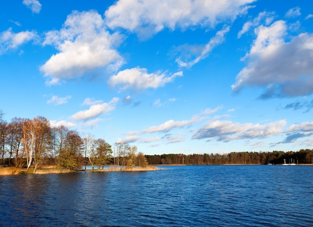 Uitzicht op de oever van het meer, overwoekerd bos