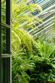 Uitzicht op de open deur en kas met verschillende varens palmen en andere tropische planten in zonnige dag