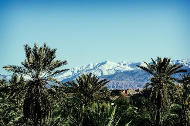 Uitzicht op de palmbomen in de eerste lijn en het atlasgebergte met sneeuw