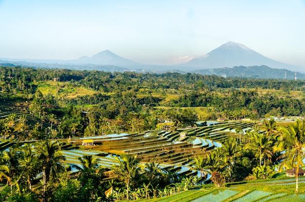 Uitzicht op de rijstterrassen van jatiluwih in bali, indonesië