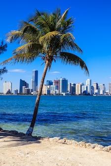 Uitzicht op de skyline van miami en de palmboom