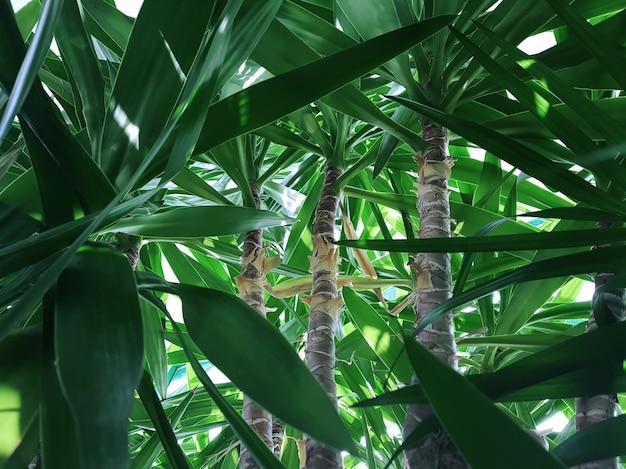 Uitzicht op de stammen van palmbomen in de jungle door dichte bladeren. concept achtergrond, dieren in het wild, natuur, landschap, tropen.