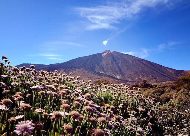 Uitzicht op de teide vulkaan in het nationaal park teide, tenerife, canarische eilanden, spanje.