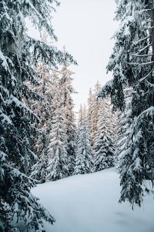 Uitzicht op een besneeuwd bos