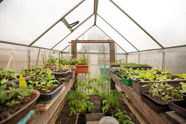 Uitzicht op een biokas met een soort groentezaailingen, landbouw- en tuinconcept