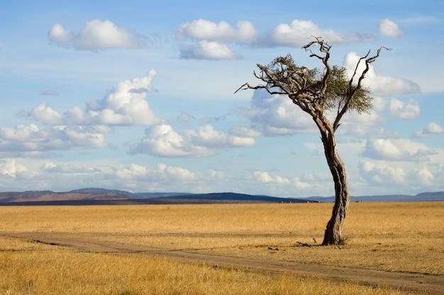 Uitzicht op een boom in het midden van een vlakte in het natuurreservaat van masai mara.