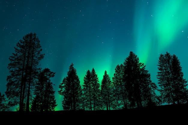 Uitzicht op een bos met de nachtelijke hemel