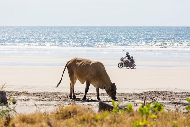 Uitzicht op een klein strand in el salvador, pacifische kust