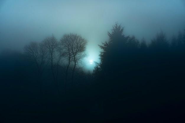 Uitzicht op een mistig bos 's nachts
