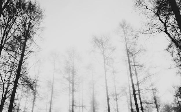 Uitzicht op een mistig bos