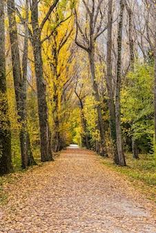 Uitzicht op een pad tussen de bomen in een zeer kleurrijk bos in de herfst