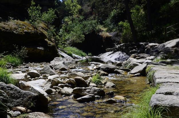 Uitzicht op een rivier in het bos