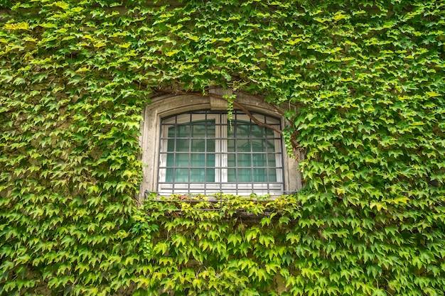 Uitzicht op gevel met muur en ramen, gedekt door overwoekerde klimplantplant.