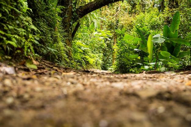 Uitzicht op groen regenwoud tijdens regenseizoen