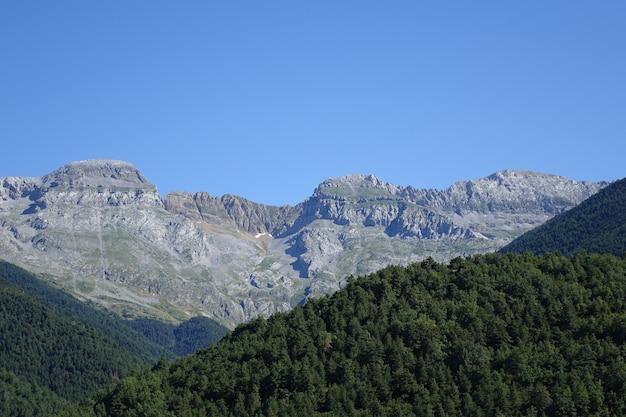 Uitzicht op grote bergen achter het bos