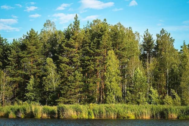 Uitzicht op het gemengde bos