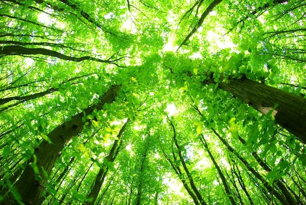 Uitzicht op het groene bos