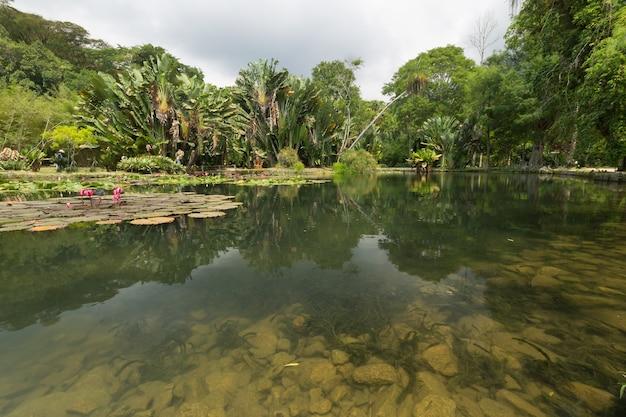 Uitzicht op het meer in de botanische tuin in rio de janeiro, brazilië.