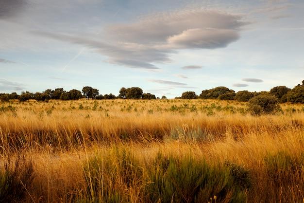 Uitzicht op het spaanse platteland