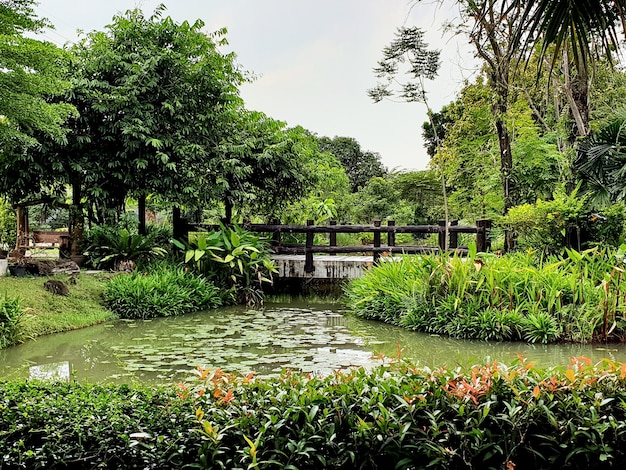 Uitzicht op lotusvijver en brug in de tuin