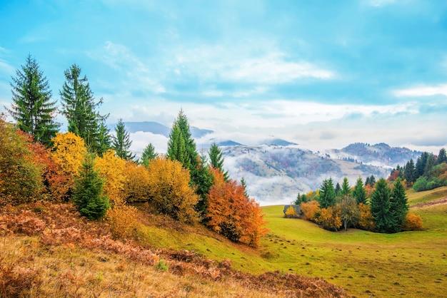 Uitzicht op majestueus bergbos en prachtige mistige heuvel met kleurrijke naaldbomen