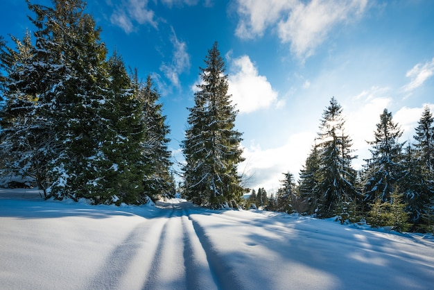 Uitzicht op majestueuze groene sparren die op een heuvel groeien in de wintersneeuwbanken tegen een blauwe lucht