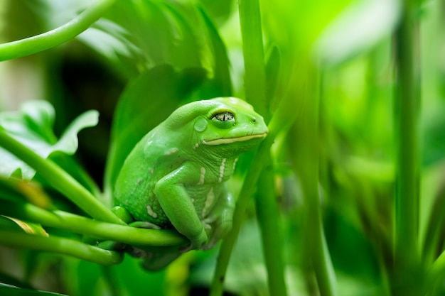 Uitzicht op monkey tree frog