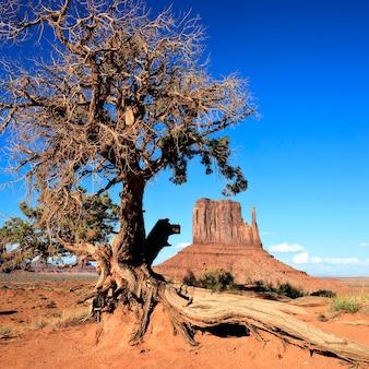 Uitzicht op monument valley en boom, verenigde staten