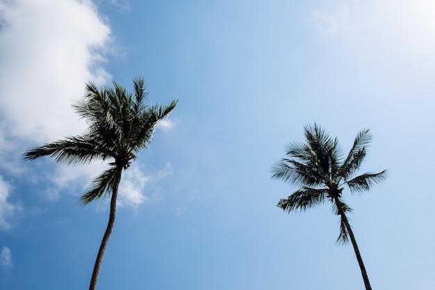 Uitzicht op mooie tropische palmen. vakantie en vakantie concept