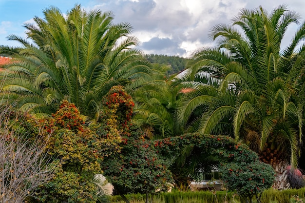 Uitzicht op palmbomen steegje in park en weelderig groen in zonnige dag. selectieve aandacht