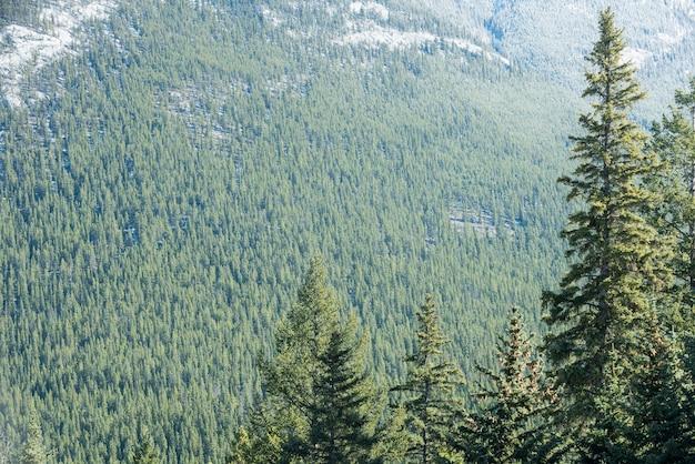 Uitzicht op pijnbomen