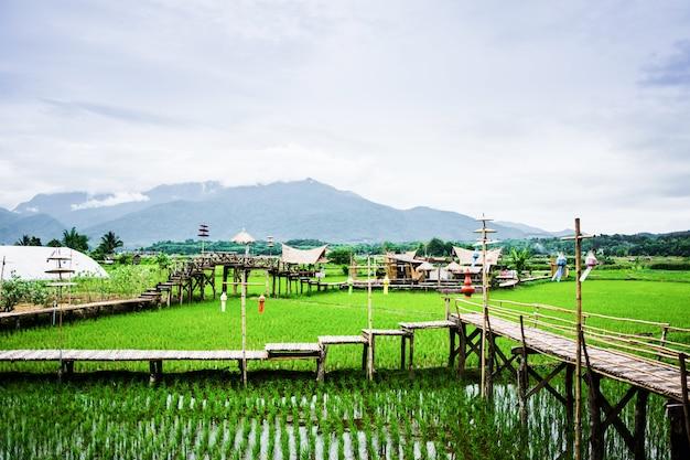 Uitzicht op rijstvelden en bergen en hut in wat phuket