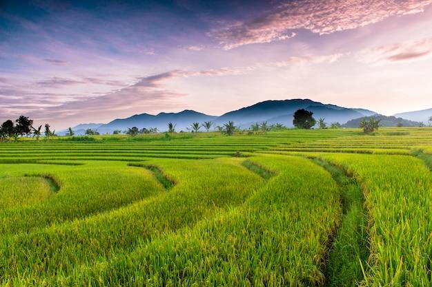 Uitzicht op rijstvelden en bergen in de ochtend
